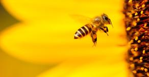 More Like a Barnacle, Less Like a Bee