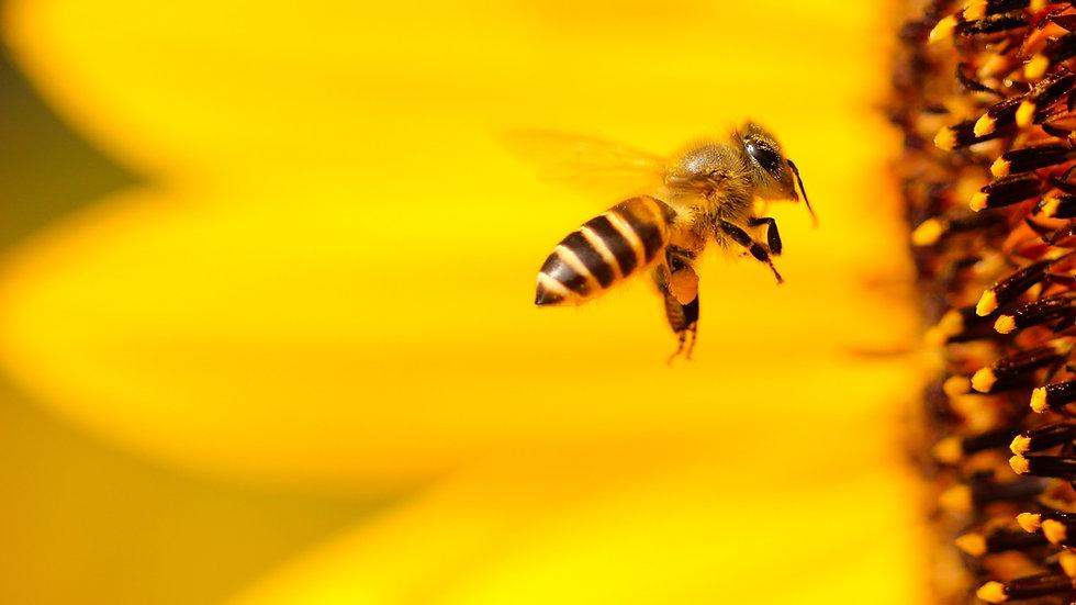Parrainer 5000 abeilles