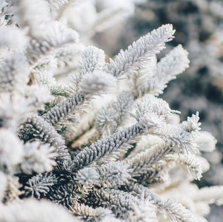 Spring Frost & Freeze Warning!