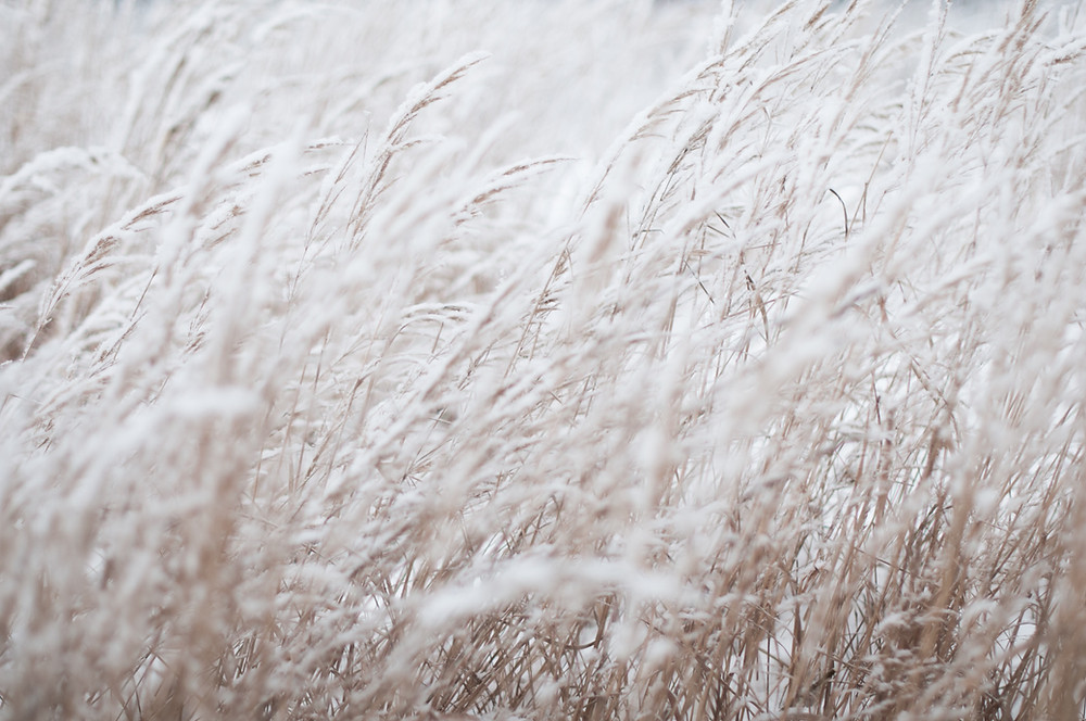 White grasses | Cognitive Hypnotherapy | www.KirstyMacdonald.co.uk