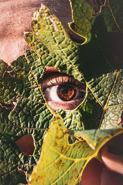Image by Elias Maurer