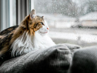 Winter Storms and Power Outages: How to Plan Ahead For Your Cat