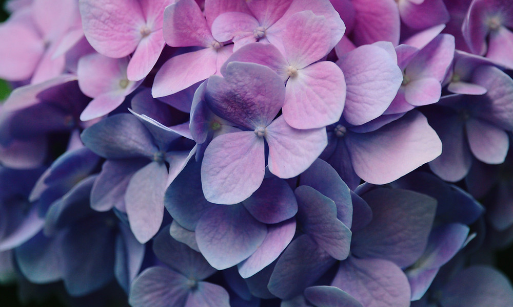 what does the color purple symbolize