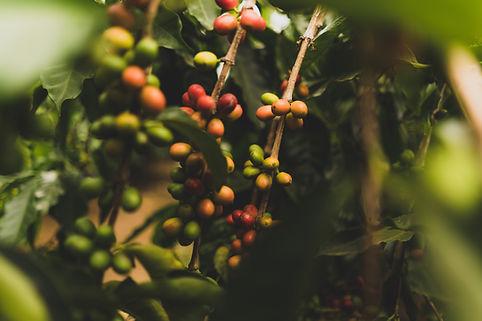Coffee Origins