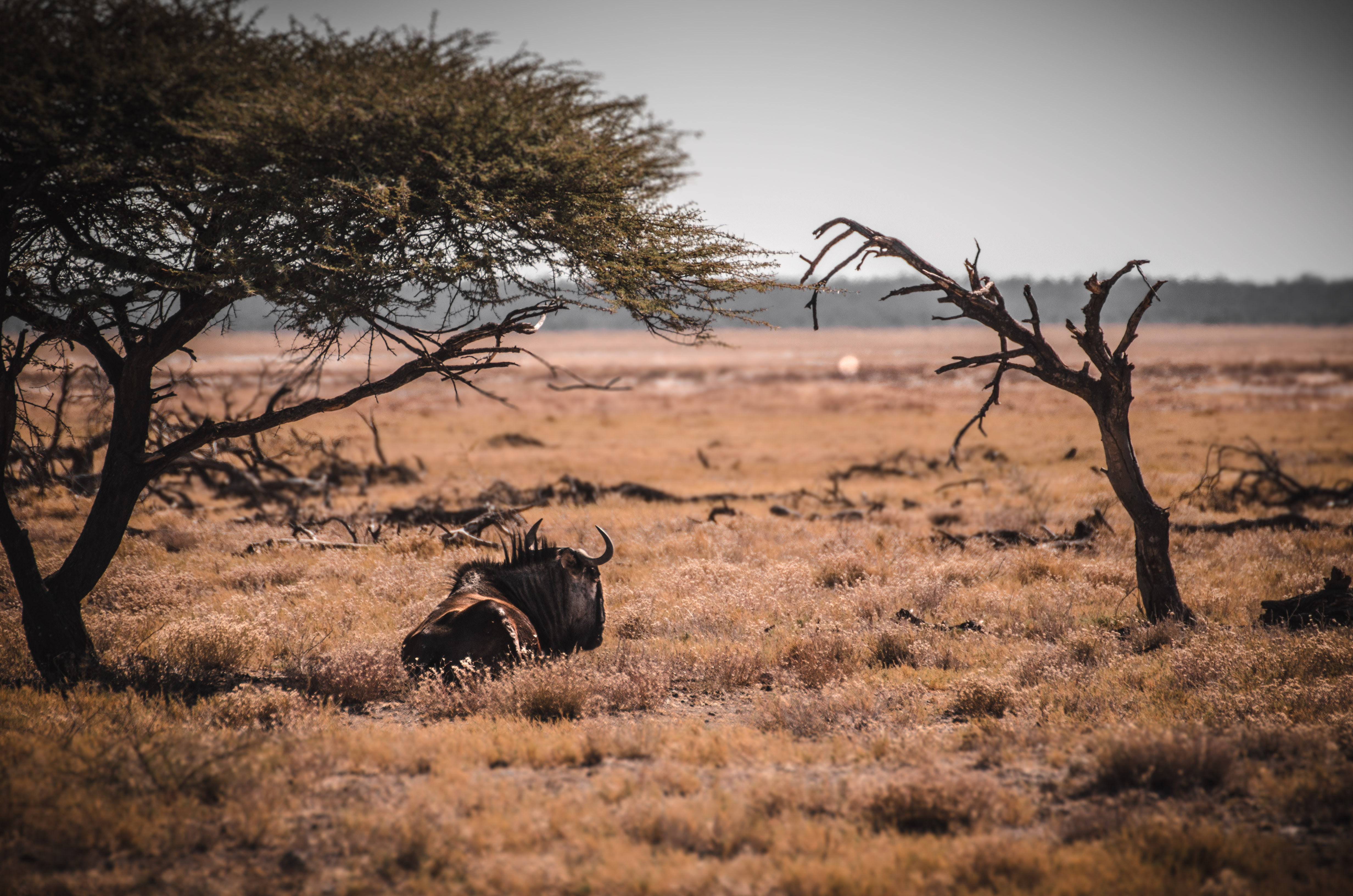 selfdrive namibia