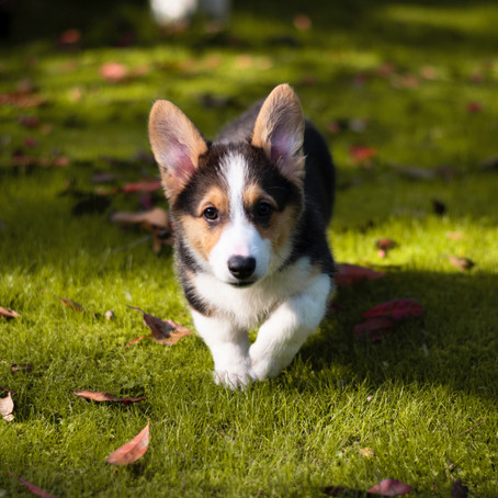 So you've decided to get a dog, now what?