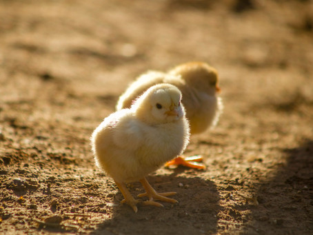 Marketing's Chicken And Egg