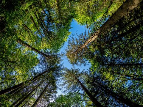 Top 10 Trees