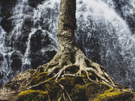 Staying Rooted When Life is Messy