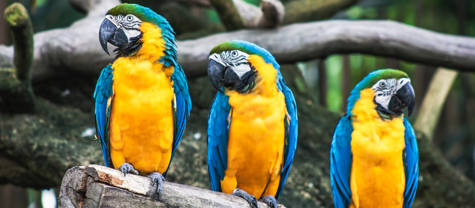 World's Colorful Birds! Real Beautiful Birds!