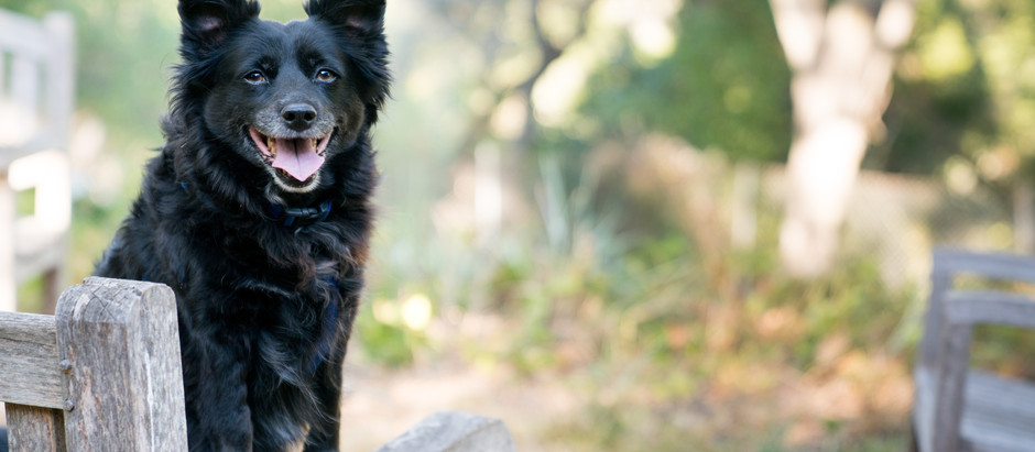 Positive Dog Trainers You NEED To Know About