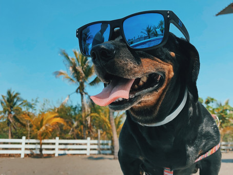 Employees' Safety During The Dog Days Of Summer
