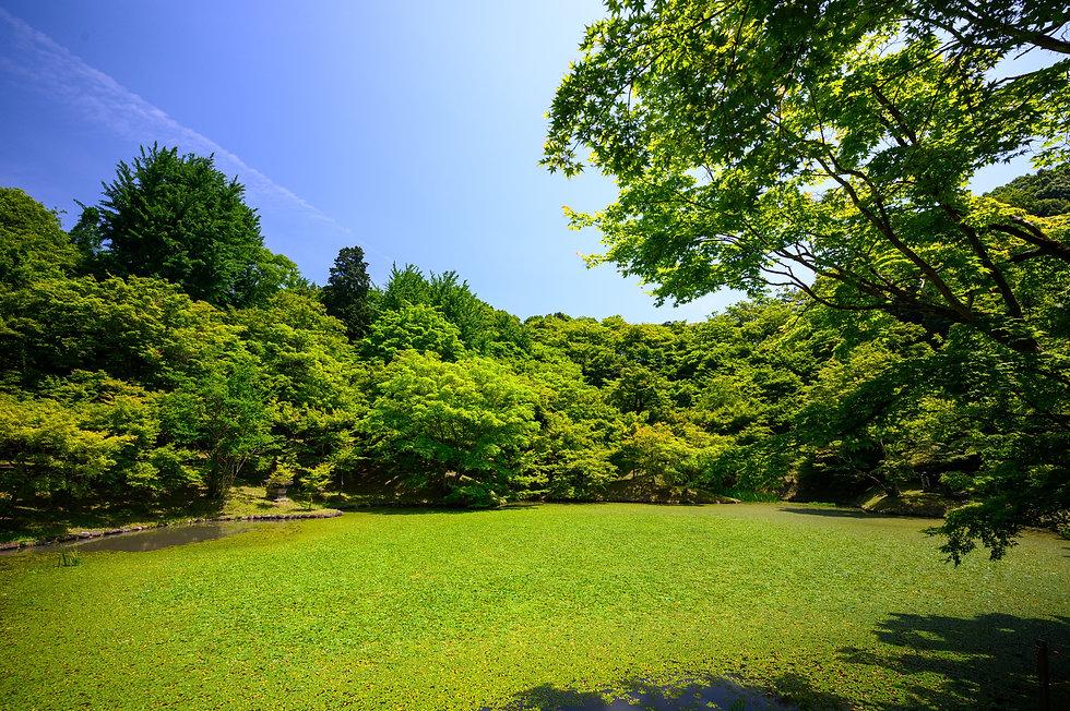 Image by Kouji Tsuru