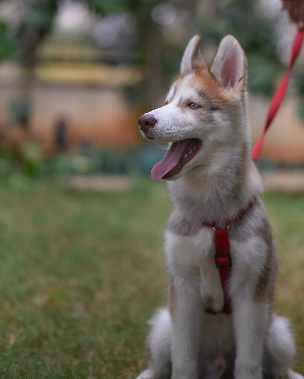 separation anxiety in my dog because of COVID-19 coronavirus Long Beach California Dog walkers