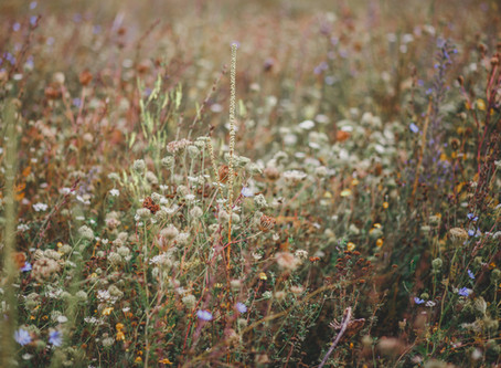 Identifying the Top Three Most Pesky Weeds