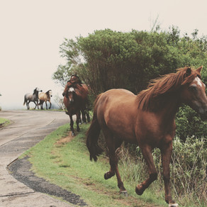 Poem: Who commands the cavalry of your Wild Life?