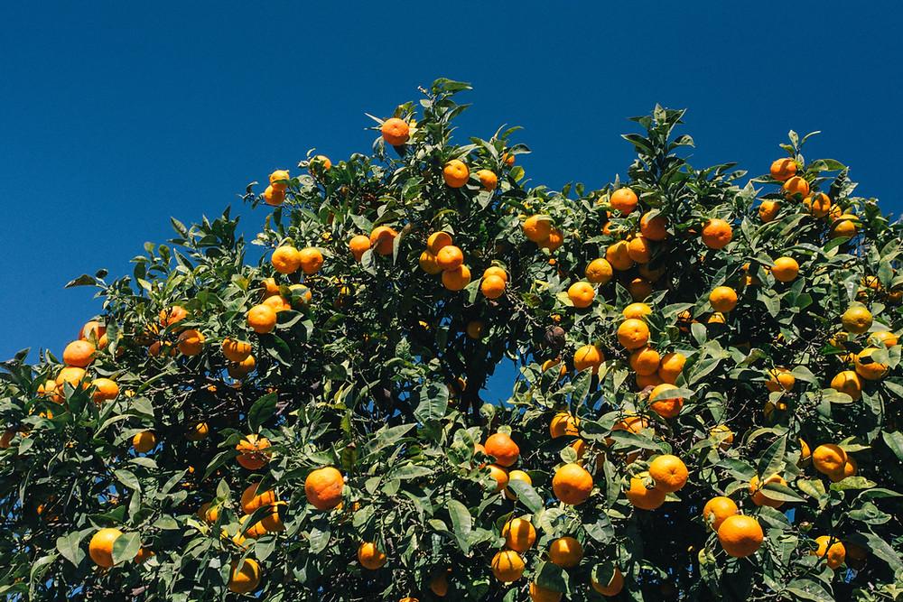 Limonene Terpene Isolate found in Oranges and Citrus
