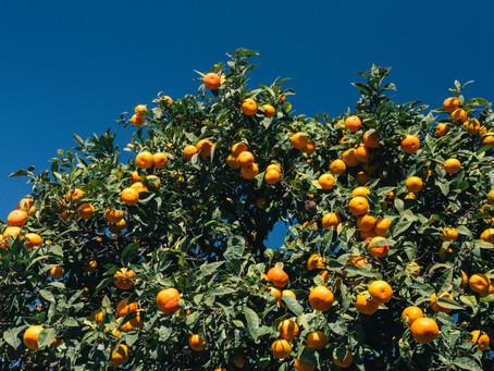 Terpene Isolates 101: Limonene