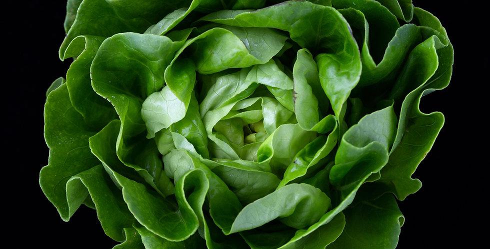 Salad Bar Bed