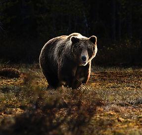 Saving unwanted bears
