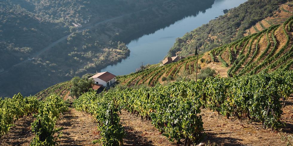 A Trip Down the Douro to Quinta do Crasto!
