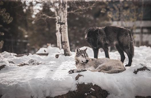 Image by Luemen Carlson