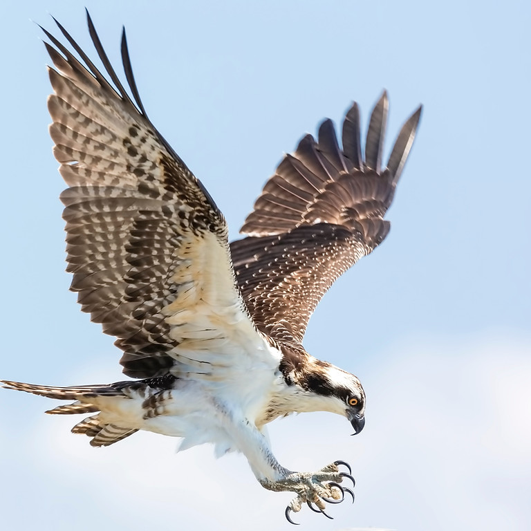 Summer Reading Finale: Horizon Wings Raptor Rescue