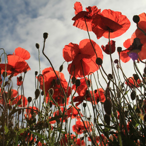 Remembrance Sunday, 8th November 2020