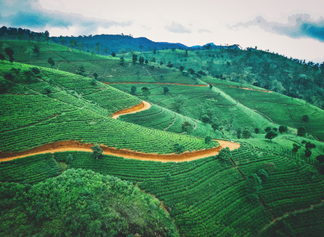 REPORT: Eat, Drink, Stay and Play in Sri Lanka