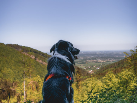 Help Your Dog Understand Commands