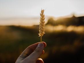 Low FODMAP: Should You be Gluten Free?