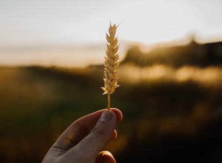 Low FODMAP does not mean gluten free