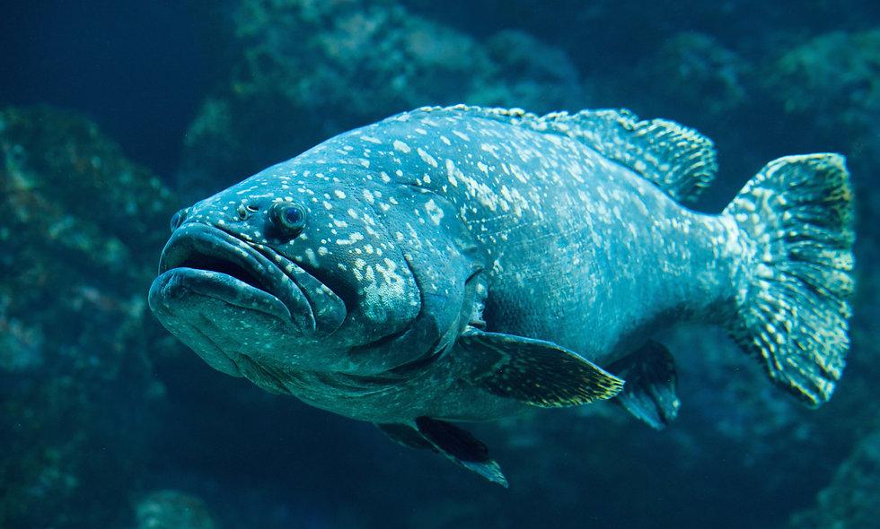 Virtual Classroom: Fish