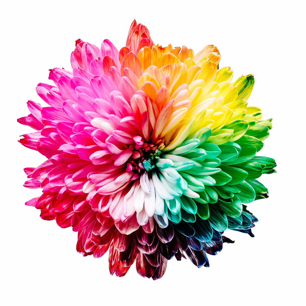 rainbow colored flower