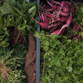 How ICTs Could benefit the Farming Communities of Jamaica