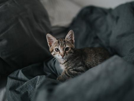 Verursacht Trennungsangst Verhaltensprobleme bei Katzen?