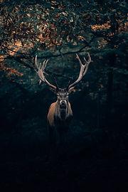 Image by Philipp Pilz