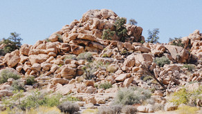 3 Poems for a Joshua Tree