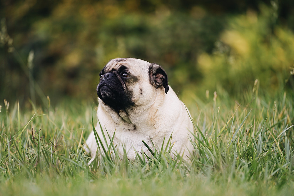 my dog has diabetes - what to do | Cuyamaca Animal Hospital | Santee, San Diego