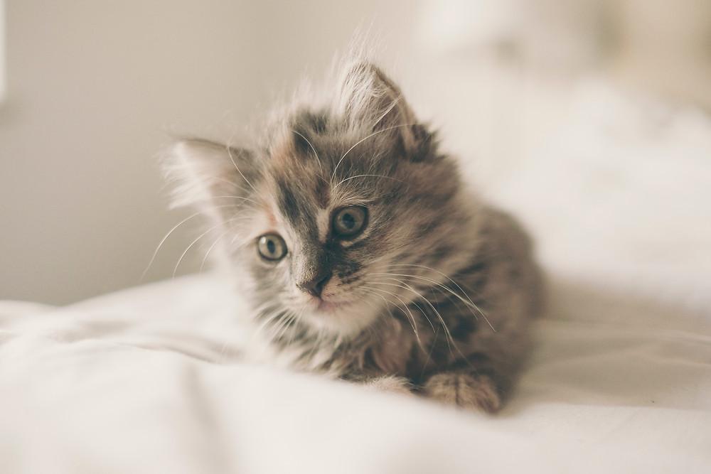 Cute kitten on a bed