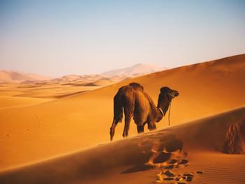 Co ochutnat v Maroku? Šneci, Tajine, Chebakia, merguez nebo pomerančový džus!