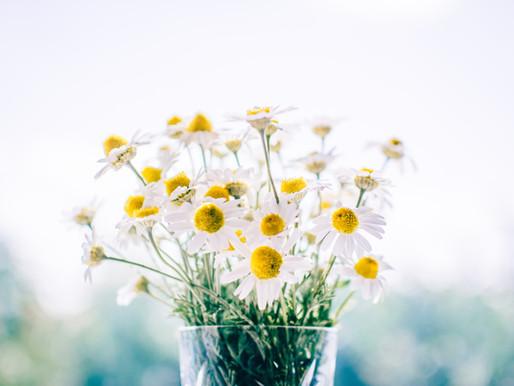 7 of the best calming herbs