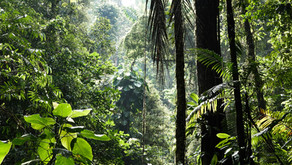 Peers debate the biodiversity emergency and the Dasgupta Review