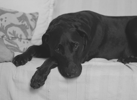 Кое причинява камъни в пикочния мехур при кучетата?