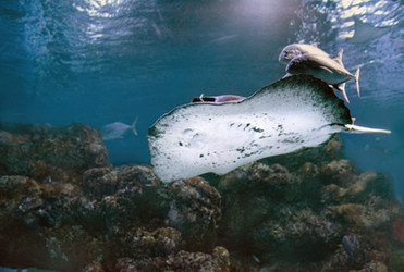 Snorkel La Palma Oceanológico