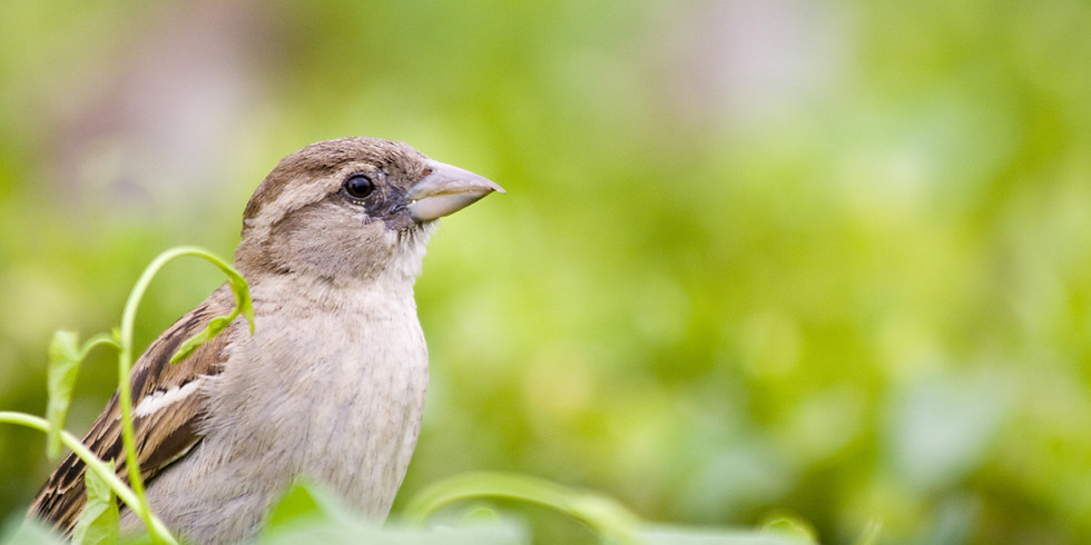 God's Eye is on the Sparrow: Black Birding and Beyond
