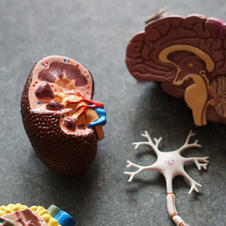 Moderna Vaccine and Neurological Side Effects