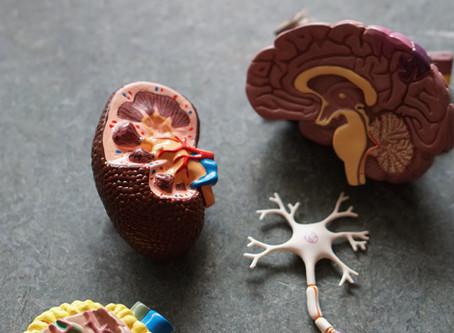 Das vegetative/ autonome Nervensystem (ANS)