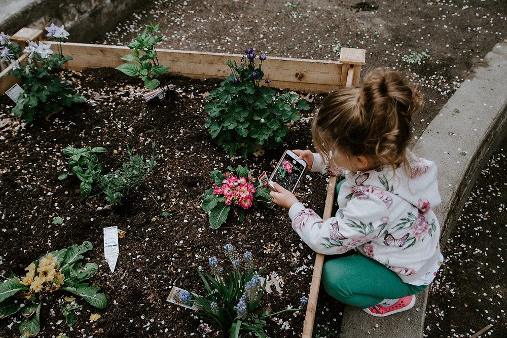 a small girl stooping down to take a picture of a flower in a raised garden bed