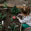 Flor Box OXO | Edible Flowers | Medicinal Flowers